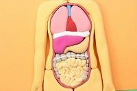 内臓の写真